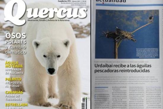 La revista de naturaleza Quercus se hace eco de la actualidad del proyecto del águila pescadora en Urdaibai
