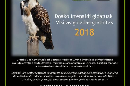 Observación de Águilas pescadoras en Urdaibai - Visitas guiadas gratuitas 2018